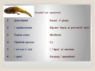 Итшабақтың ерекшелігі 1 Дене пішіні Балық тәріздес 2 Қанайналымы Бір шеңберлі