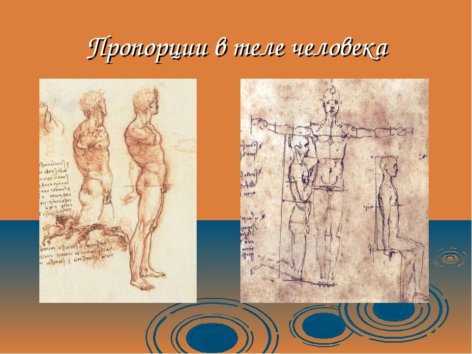 Пропорции в теле человека