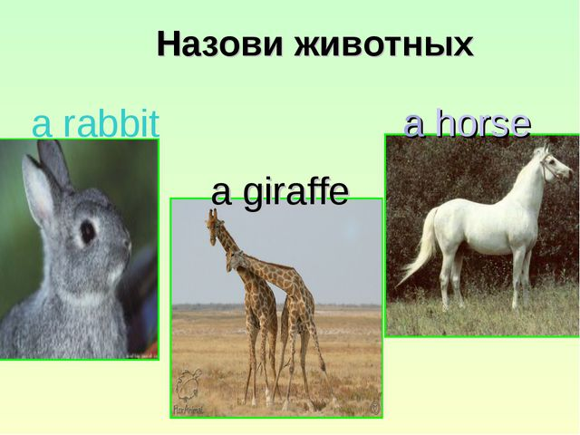 Назови животных a rabbit a giraffe a horse