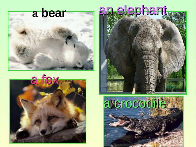 an elephant a fox a crocodile a bear