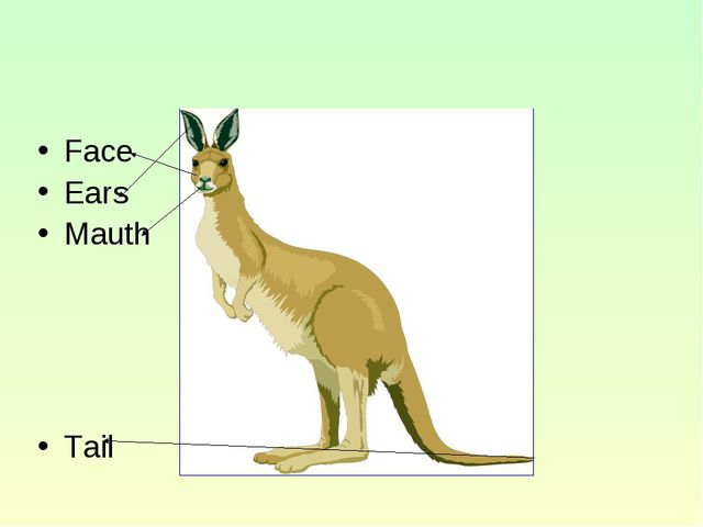 Face Ears Mauth Tail