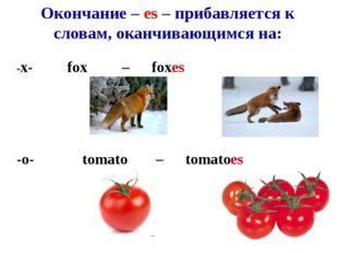 Окончание – es – прибавляется к словам, оканчивающимся на: -x-fox –fox