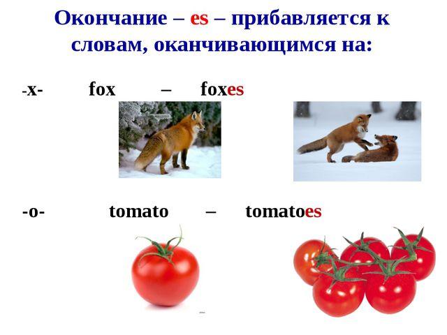 Окончание – es – прибавляется к словам, оканчивающимся на: -x-fox –fox...