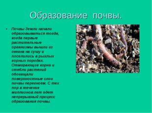 Образование почвы.