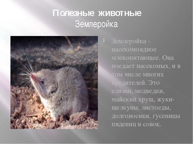 Полезные животные Землеройка Землеройка - насекомоядное млекопитающее. Она по...