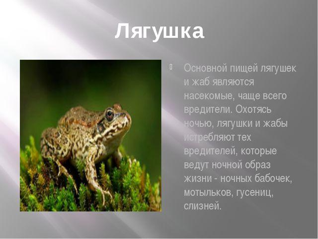 Лягушка Основной пищей лягушек и жаб являются насекомые, чаще всего вредители...
