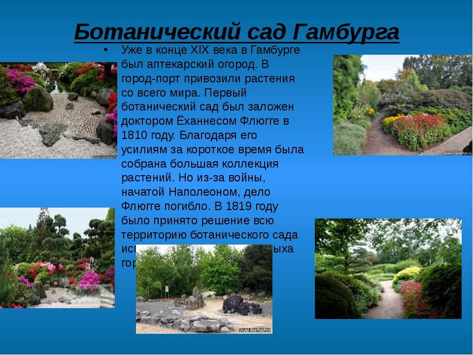 Ботанический сад Гамбурга Уже в конце XIX века в Гамбурге был аптекарский ого...