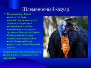 Шлемоносный казуар Внешний вид. Шлем помогает птицам пробиваться сквозь густы