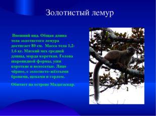 Золотистый лемур Внешний вид. Общая длина тела золотистого лемура достигает 8