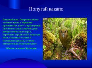 Попугай какапо Внешний вид. Оперение жёлто-зелёного цвета с чёрными крапинкам