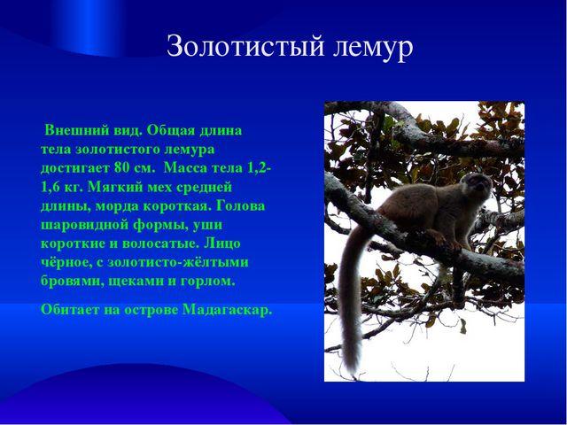 Золотистый лемур Внешний вид. Общая длина тела золотистого лемура достигает 8...