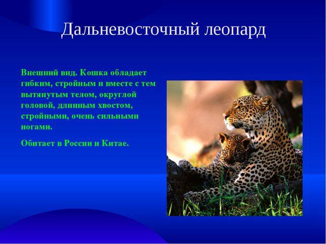 Дальневосточный леопард Внешний вид. Кошка обладает гибким, стройным и вместе...