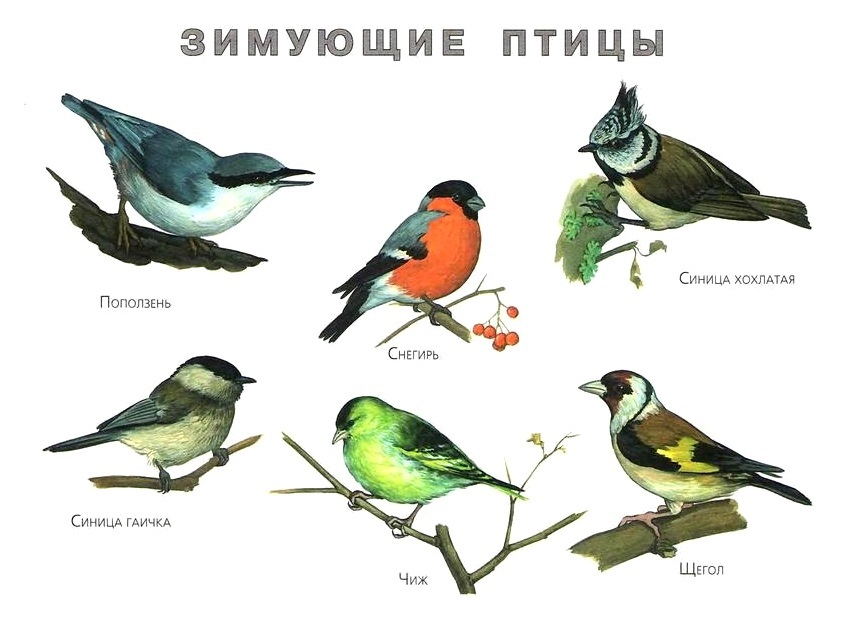 http://gamejulia.ru/images/i/zimuyushchie-ptitsi1.jpg