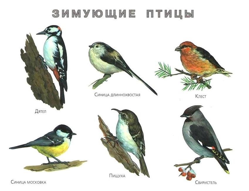 http://gamejulia.ru/images/i/zimuyushchie-ptitsi2.jpg