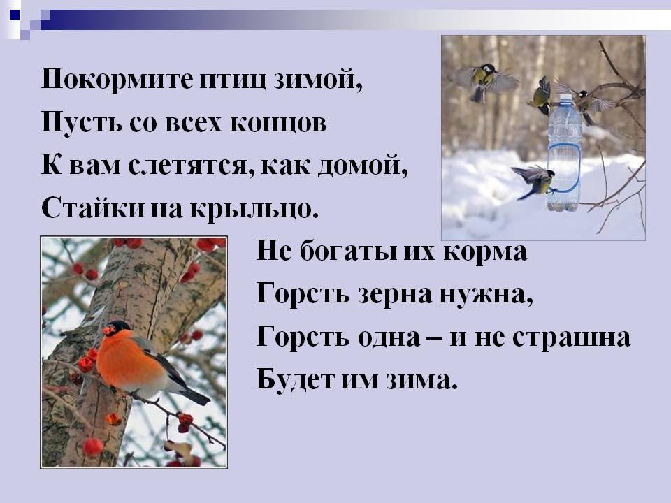 http://900igr.net/datas/okruzhajuschij-mir/Pereletnye-i-zimujuschie/0018-018-Pokormite-ptits-zimoj-Pust-so-vsekh-kontsov-K-vam-sletjatsja-kak-domoj.jpg