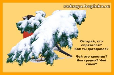 Зимующие птицы. Задания в картинках для занятий с детьми