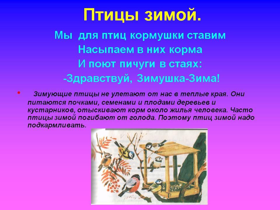 http://900igr.net/datas/okruzhajuschij-mir/Ptitsy-zimoj/0004-004-Ptitsy-zimoj.jpg
