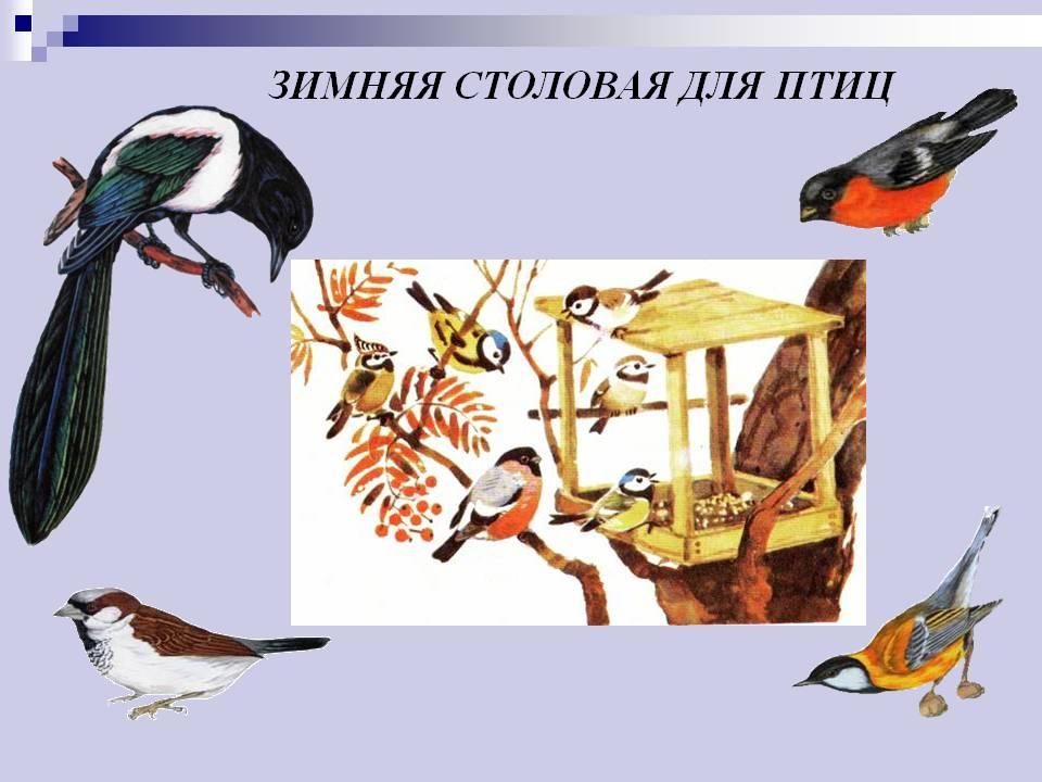 http://900igr.net/datas/okruzhajuschij-mir/Pereletnye-i-zimujuschie/0017-017-Zimnjaja-stolovaja-dlja-ptits.jpg