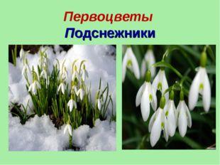 Первоцветы Подснежники