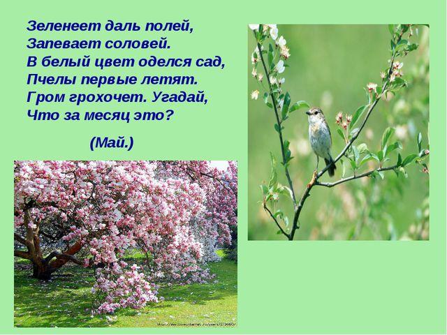 Зеленеет даль полей, Запевает соловей. В белый цвет оделся сад, Пчелы первые...