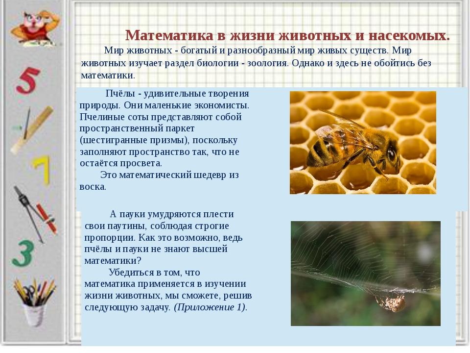Математика в жизни животных и насекомых. Мир животных - богатый и разнообраз...