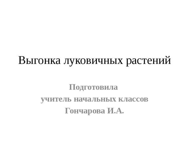 Выгонка луковичных растений Подготовила учитель начальных классов Гончарова И...
