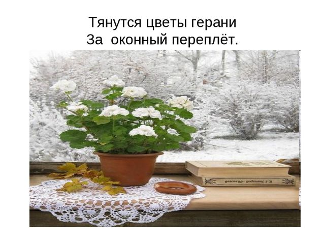 Тянутся цветы герани За оконный переплёт.
