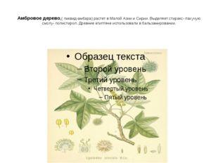 Амбровое дерево,( ликвид-амбара) растет в Малой Азии и Сирии. Выделяет стирак