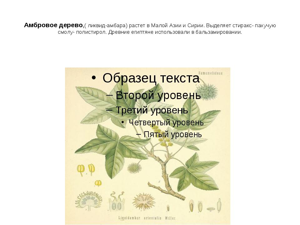 Амбровое дерево,( ликвид-амбара) растет в Малой Азии и Сирии. Выделяет стирак...