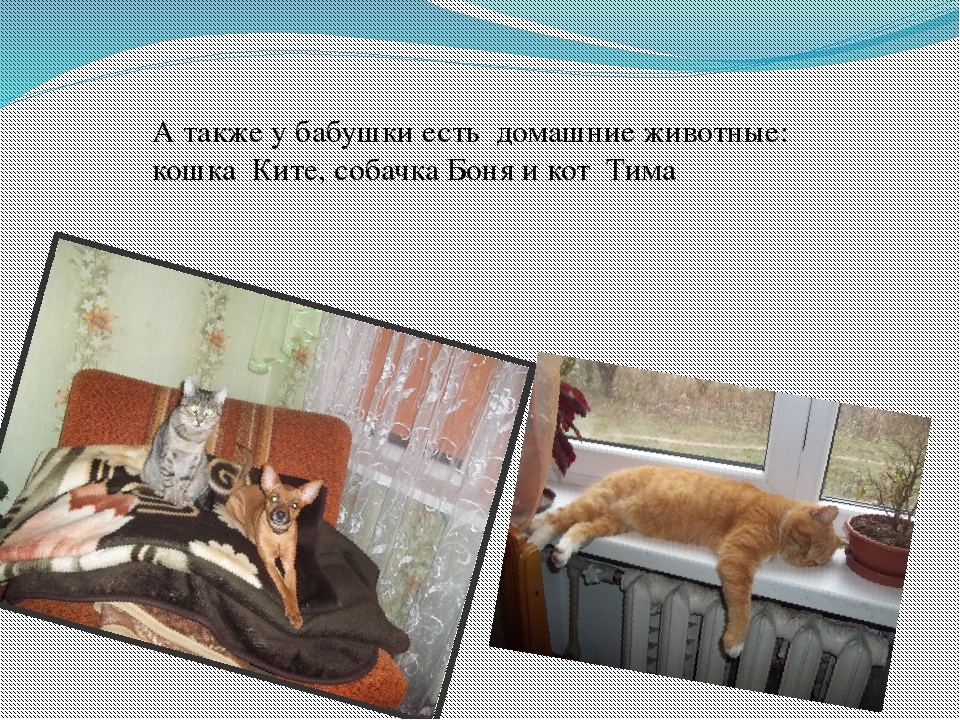 А также у бабушки есть домашние животные: кошка Ките, собачка Боня и кот Тима