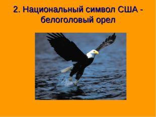 2. Национальный символ США - белоголовый орел