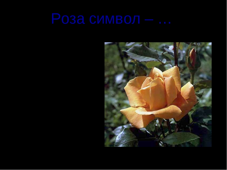 Роза символ – … Шотландии Англии Уэльса