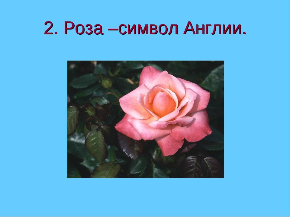 2. Роза –символ Англии.