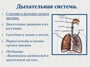 Дыхательная система. Строение и функции органов дыхания. Дыхательные движения
