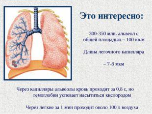 Через капилляры альвеолы кровь проходит за 0,8 с, но гемоглобин успевает насы