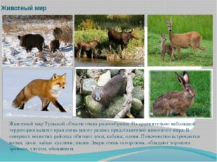 Животный мир Животный мир Тульской области очень разнообразен. На сравнительн
