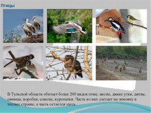 Птицы В Тульской области обитает более 200 видов птиц: аисты, дикие утки, дят