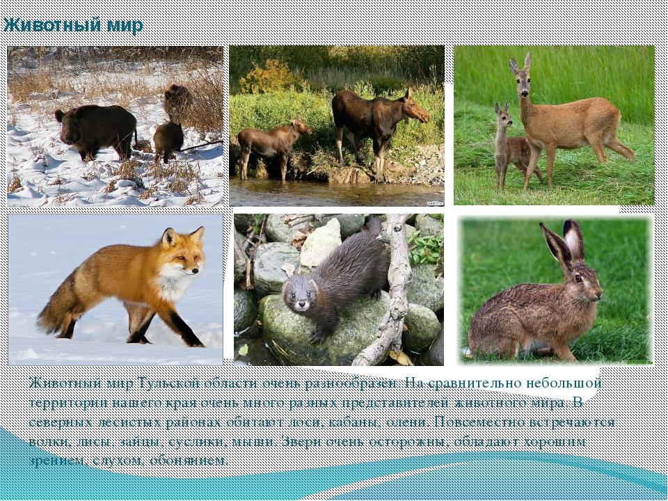 Животный мир Животный мир Тульской области очень разнообразен. На сравнительн...
