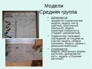 Модели Средняя группа Добавляются: предметно-схематические модели: модель ли