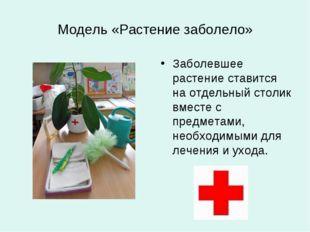 Модель «Растение заболело» Заболевшее растение ставится на отдельный столик в