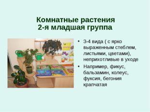 2-я младшая группа Комнатные растения 3-4 вида ( с ярко выраженным стеблем,