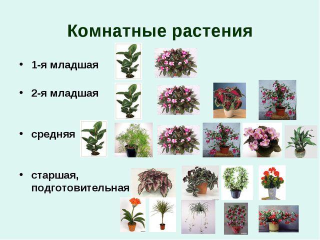 Комнатные растения 1-я младшая 2-я младшая средняя старшая, подготовительная