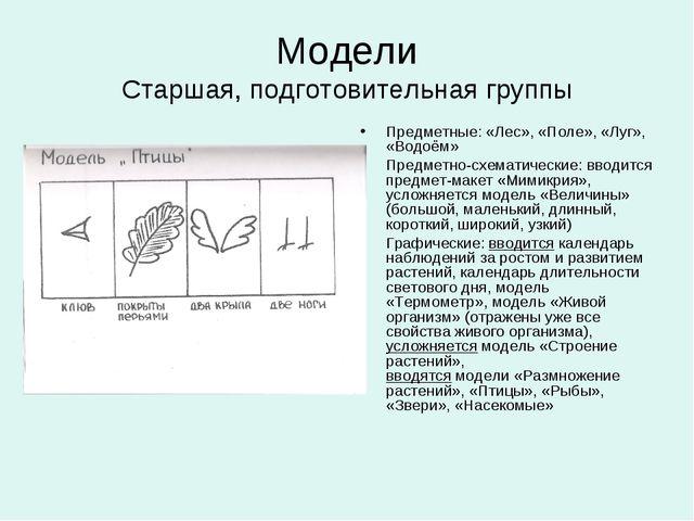 Модели Старшая, подготовительная группы Предметные: «Лес», «Поле», «Луг», «Во...