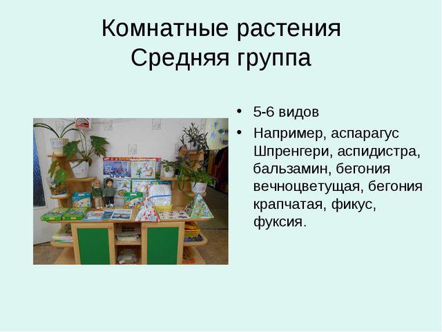 Комнатные растения Средняя группа 5-6 видов Например, аспарагус Шпренгери, ас...