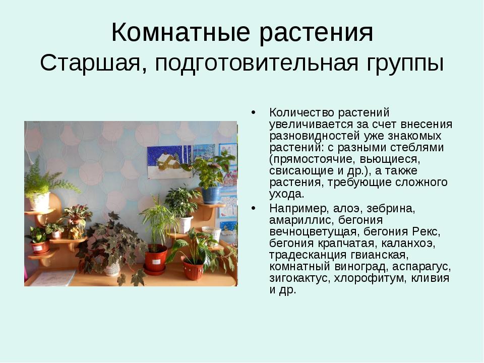 Комнатные растения Старшая, подготовительная группы Количество растений увели...
