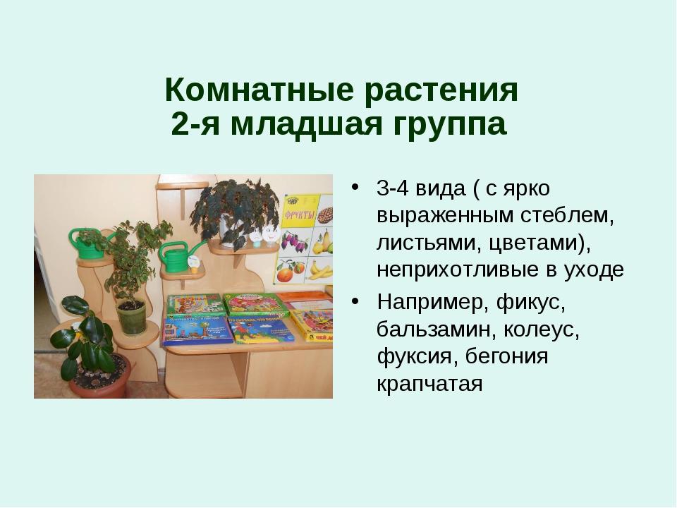 2-я младшая группа Комнатные растения 3-4 вида ( с ярко выраженным стеблем,...