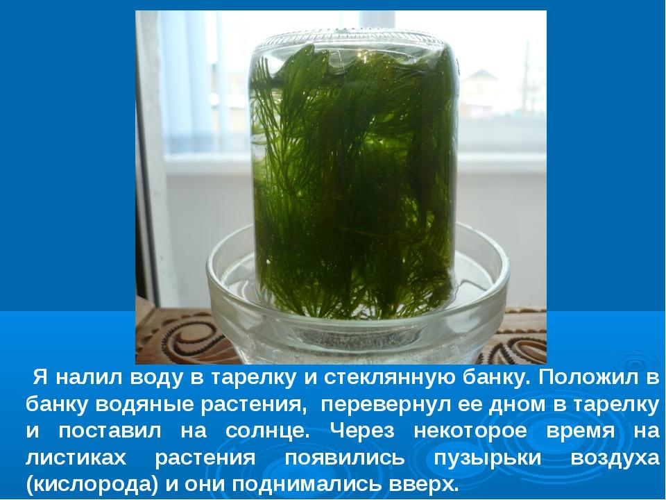 Я налил воду в тарелку и стеклянную банку. Положил в банку водяные растения,...