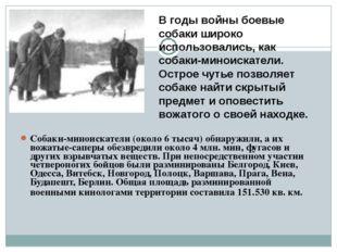 Собаки-миноискатели (около 6 тысяч) обнаружили, а их вожатые-саперы обе