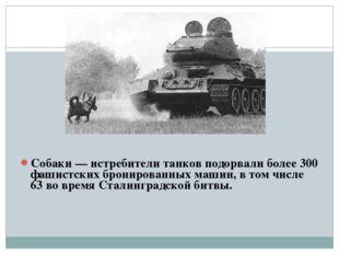 Собаки — истребители танков подорвали более 300 фашистских бронированных маш