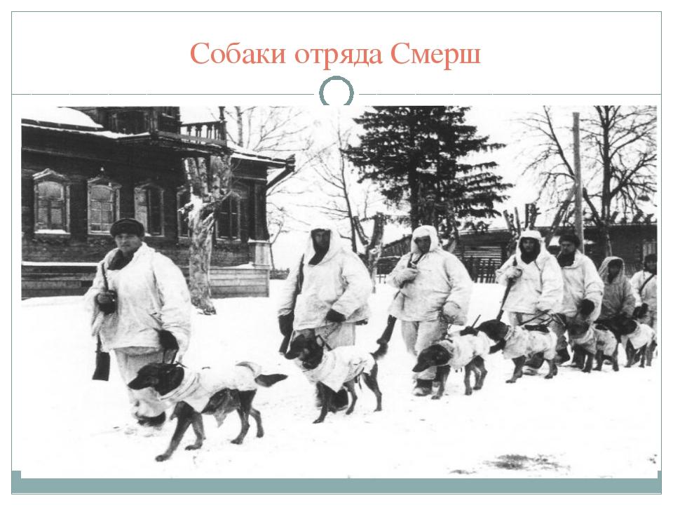Собаки отряда Смерш